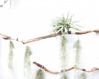 Loose-Leaf-for-web